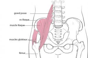 anatomie de la hanche